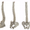 Thumbnail image for Diagnosis and Management of Spinal Pain